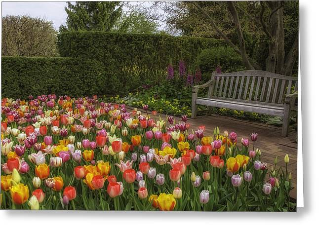 Chicago Botanic Garden Greeting Cards - Tulip Garden Greeting Card by Julie Palencia