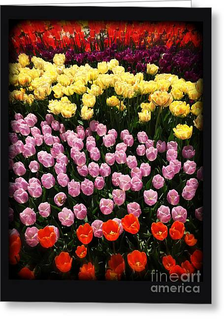 Green Day Greeting Cards - Tulip Greeting Card Greeting Card by Tom Gari Gallery-Three-Photography
