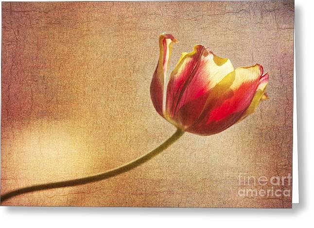 Igor Baranov Greeting Cards - Tulip Greeting Card by Igor Baranov