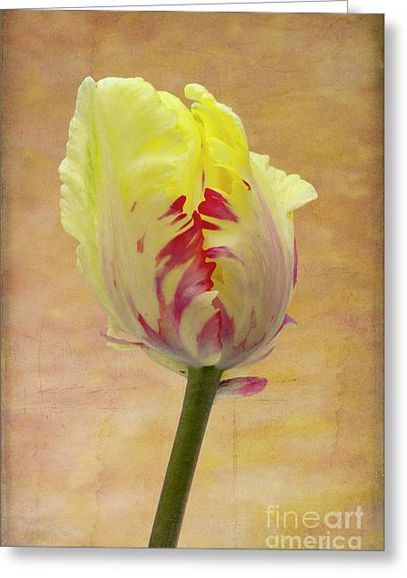 Tulip Greeting Card by Marion Galt