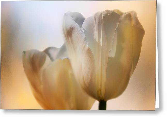Square Format Greeting Cards - Tulip Pair Greeting Card by Nikolyn McDonald
