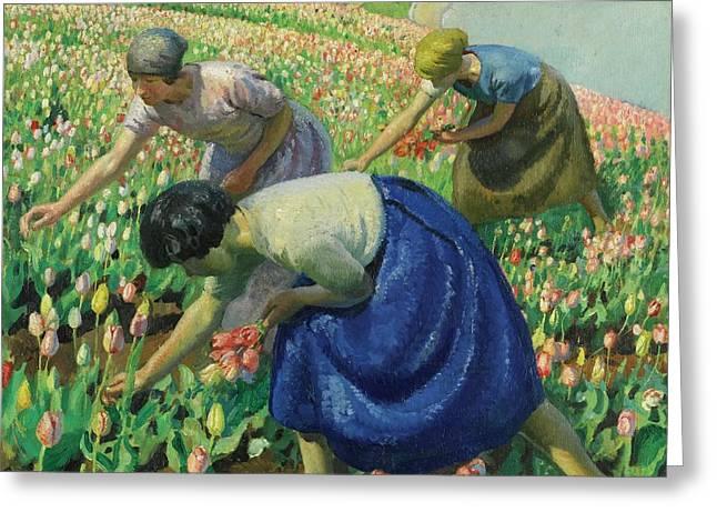 Tulip Pickers Greeting Card by Harold Harvey