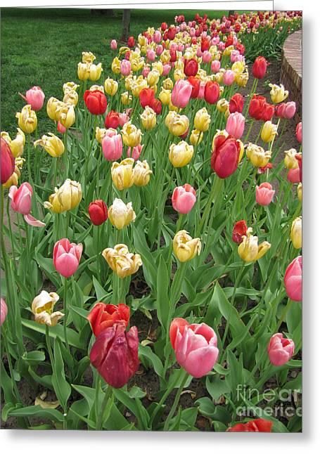 Enhanced Greeting Cards - Tulip Time Trail Greeting Card by Adri Turner