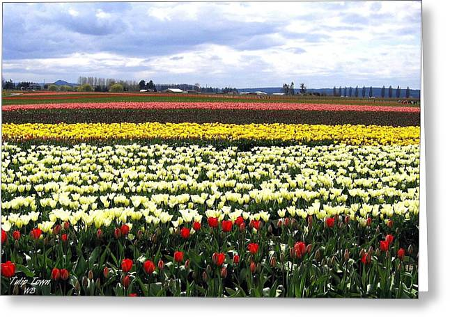 Tulip Town 4 Greeting Card by Will Borden