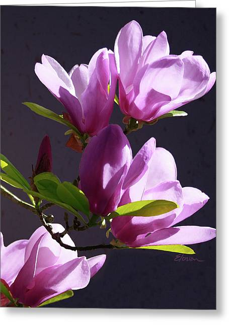 Limited Edition Mixed Media Greeting Cards - Tulip Tree Greeting Card by Elorian Landers