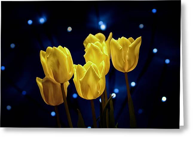 Tulip Twinkle Greeting Card by Tom Mc Nemar