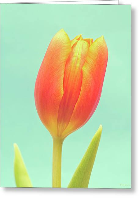 Negative Greeting Cards - Tulip Greeting Card by Wim Lanclus