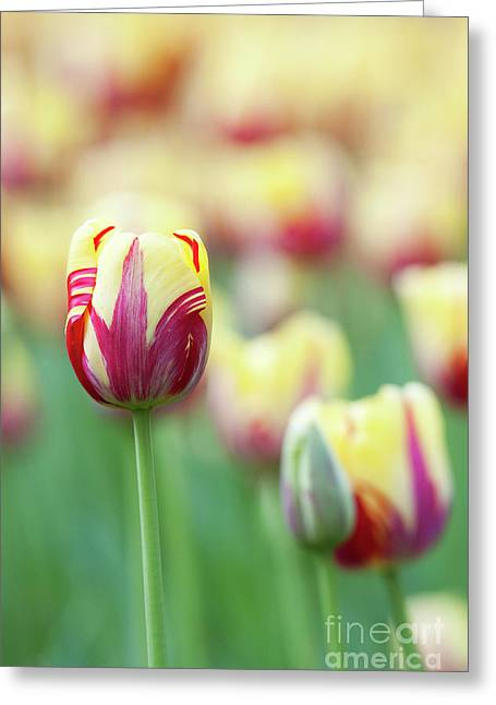 Tulip World Expression Greeting Card by Tim Gainey