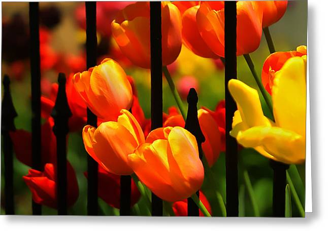 Lyle Huisken Greeting Cards - Tulips and Wrought Iron Greeting Card by Lyle  Huisken