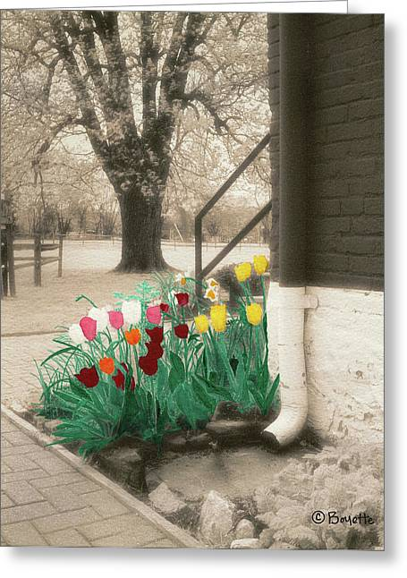 Paint Photograph Paintings Greeting Cards - Tulips at Locks House Greeting Card by Robert Boyette