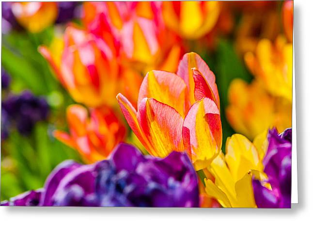 Apparel Greeting Cards - Tulips Enchanting 03 Greeting Card by Alexander Senin