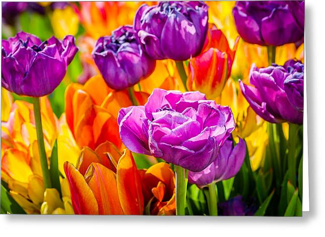 Apparel Greeting Cards - Tulips Enchanting 07 Greeting Card by Alexander Senin