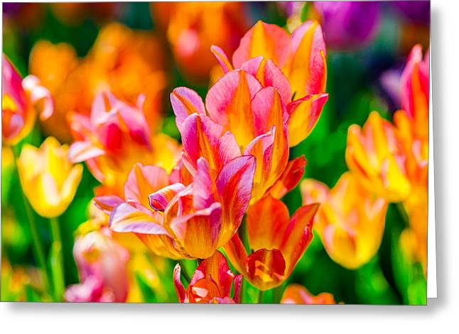 Apparel Greeting Cards - Tulips Enchanting 13 Greeting Card by Alexander Senin
