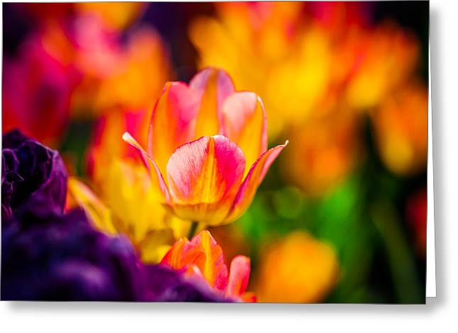 Flower Design Greeting Cards - Tulips Enchanting 15 Greeting Card by Alexander Senin
