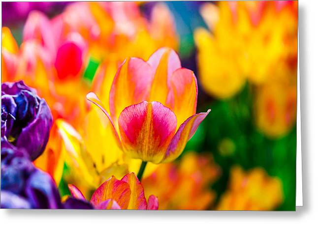 Flower Blossom Greeting Cards - Tulips Enchanting 16 Greeting Card by Alexander Senin