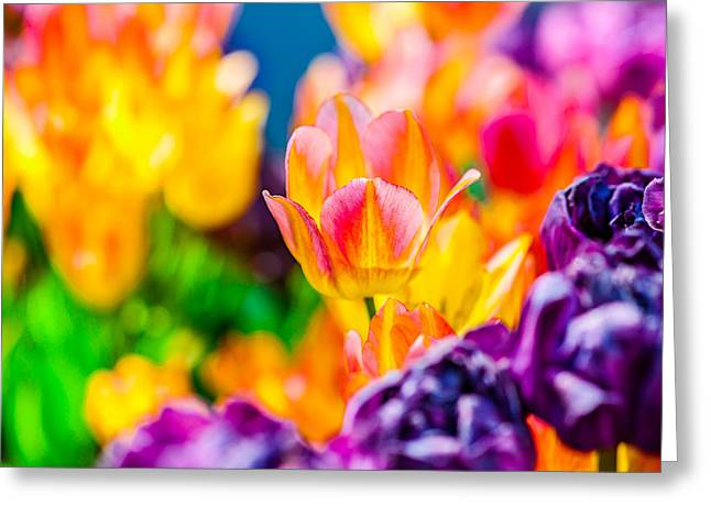 Flower Design Greeting Cards - Tulips Enchanting 17 Greeting Card by Alexander Senin