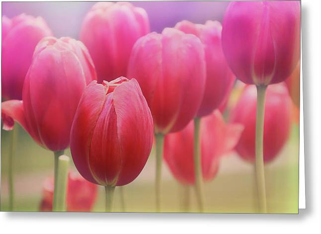 Subtle Colors Photographs Greeting Cards - Tulips Entwined Greeting Card by Carol Japp