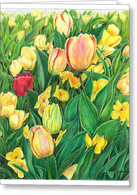 Spring Bulbs Drawings Greeting Cards - Tulips from Amsterdam Greeting Card by Jeanette Schumacher