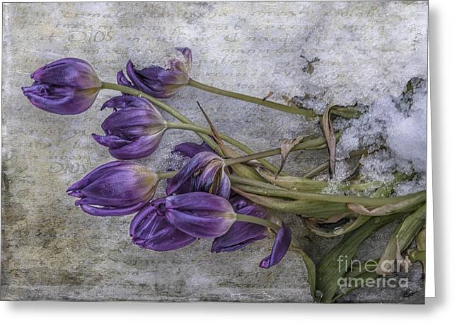 Spring Greening Greeting Cards - Tulips Frozen Greeting Card by Terry Rowe