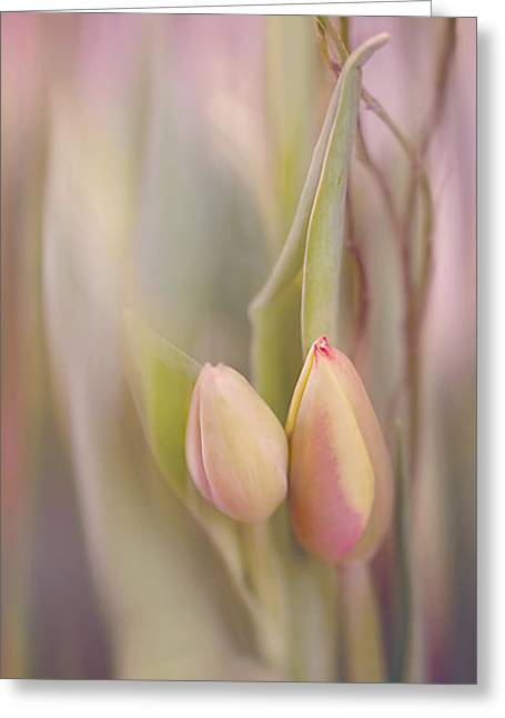 Tulips In Pastel Greeting Card by Cindy Grundsten