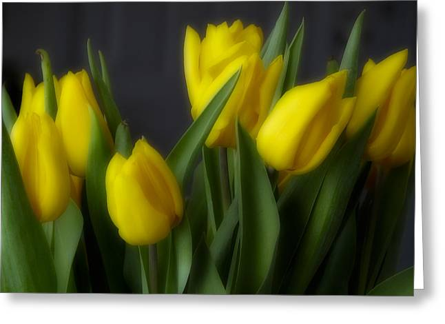 Tulips In The Kitchen Greeting Card by Ches Black