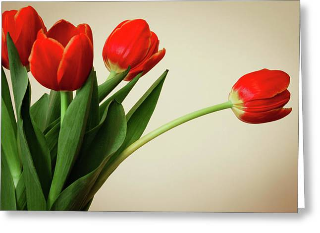 Photogrpah Greeting Cards - Tulips Greeting Card by Leah Dore