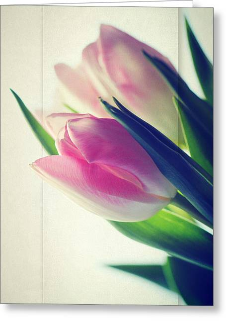 Interior Still Life Photographs Greeting Cards - Tulips Light Greeting Card by Heike Hultsch