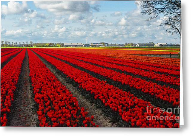 Ready For Harvest Greeting Cards - Tulips Greeting Card by Mim White