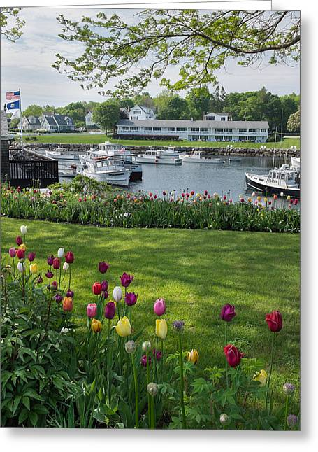 Lobster Boat Greeting Cards - Tulips on Perkins Cove Greeting Card by Joseph Smith