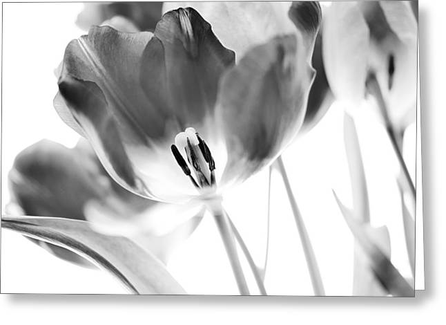 Flower Greeting Cards - Tulips Greeting Card by Silke Magino