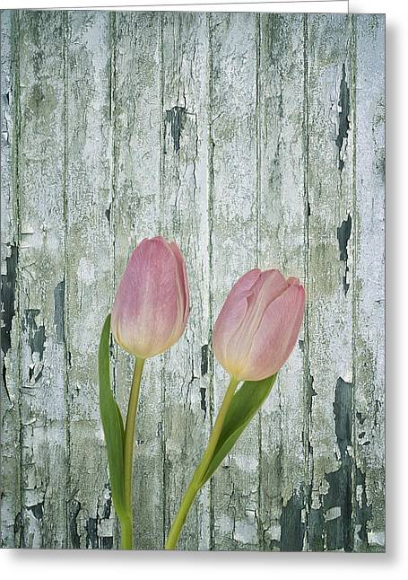 Tulips Two Greeting Card by Kim Hojnacki
