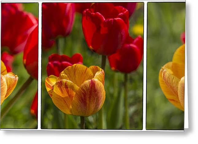 Flower Works Greeting Cards - Tulips Greeting Card by Veikko Suikkanen