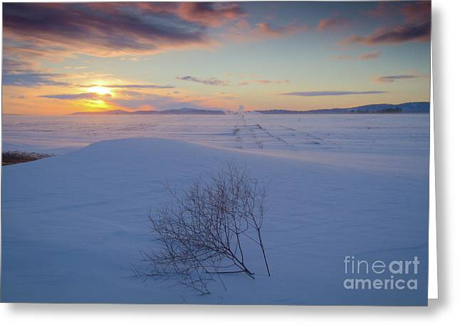 Tumble in the Snow Greeting Card by Idaho Scenic Images Linda Lantzy