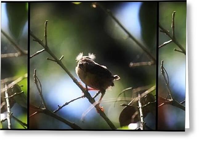 Baby Bird Greeting Cards - Turbulent Take off Greeting Card by Mandy Shupp