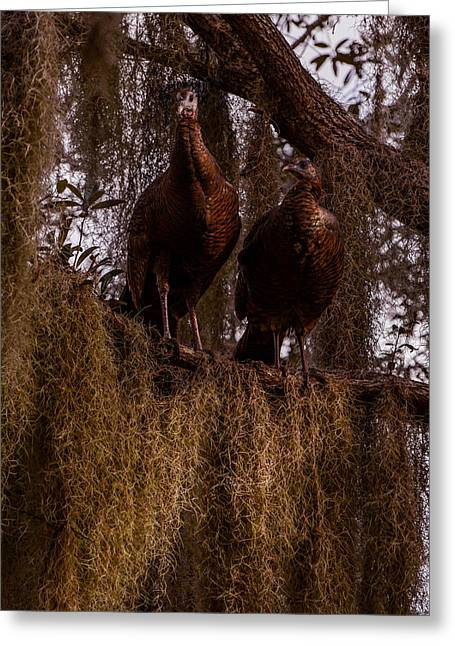 Florida Wild Turkey Greeting Cards - Turkey guys Greeting Card by Zina Stromberg