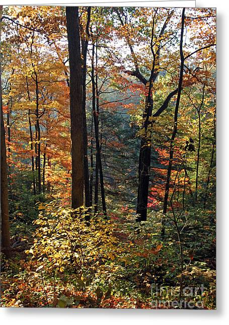 Turkey Run State Park Greeting Cards - Turkey Run State Park Greeting Card by Steve  Gass