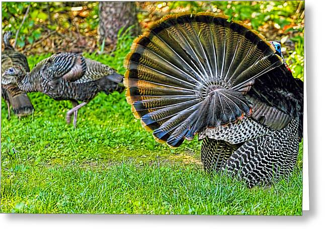 Barn Yard Greeting Cards - Turkey Tails Greeting Card by Geraldine Scull