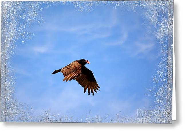 Turkey Vulture Greeting Card by Brenda Bostic