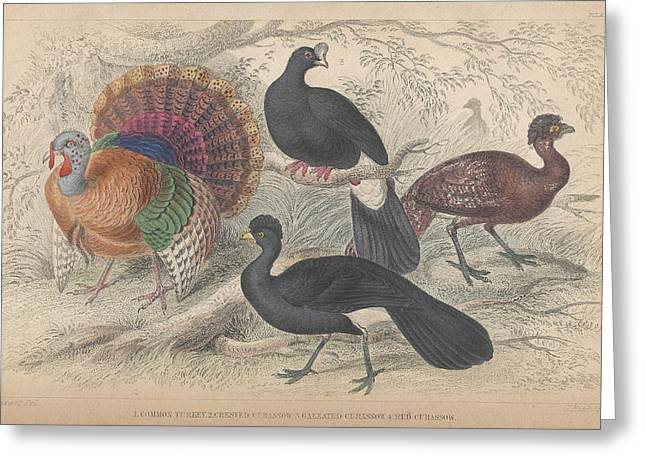 Turkeys Greeting Card by Oliver Goldsmith