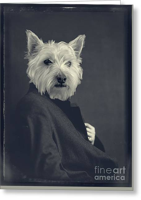 Westie Digital Greeting Cards - Turn of the Century Greeting Card by Edward Fielding