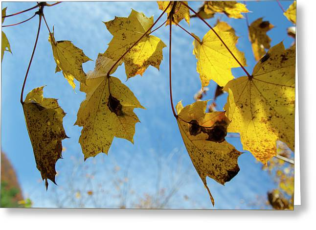 Turning Over A New Leaf Greeting Card by Bill Cannon