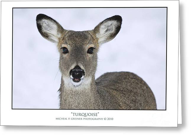 Amimal Greeting Cards - Turquois Greeting Card by Michael Greiner