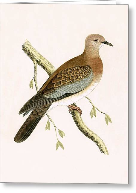 Turtle Dove Greeting Card by English School