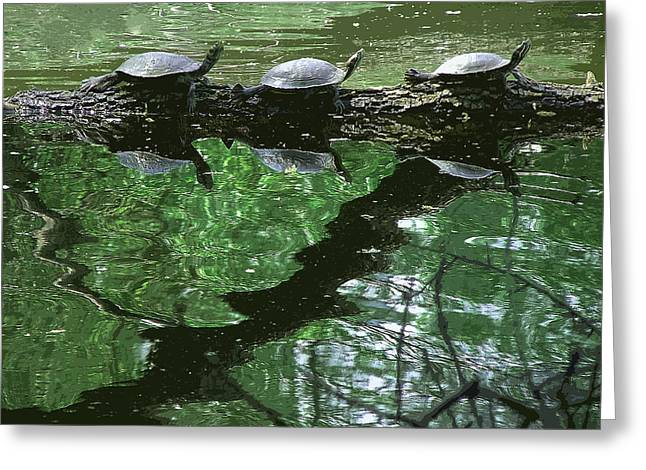 Algae Greeting Cards - Turtle Frieze Greeting Card by Stan  Magnan