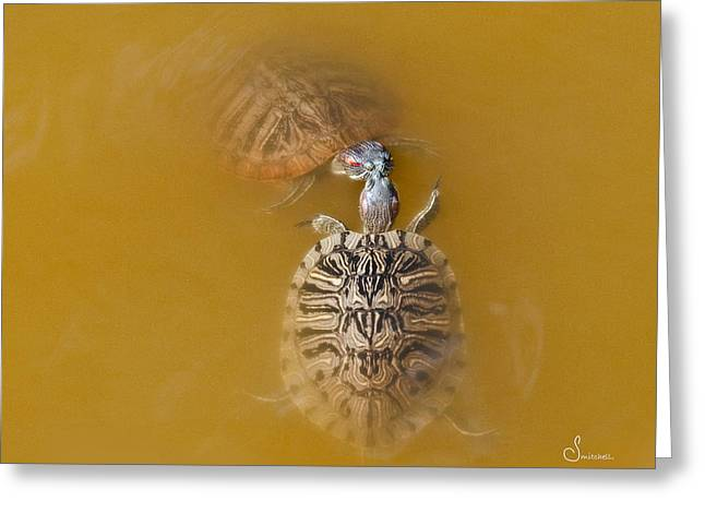 Wildlife Greeting Cards - Turtle Kiss Greeting Card by Sally Mitchell