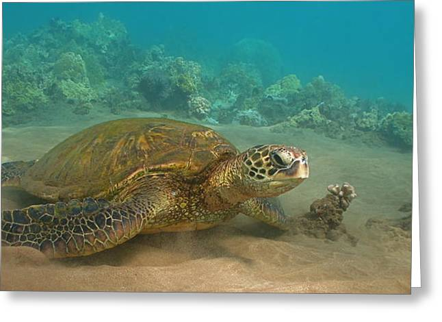 Green Sea Turtle Greeting Cards - Turtle Magic Greeting Card by Brian Governale