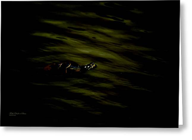 Duke Island Park Greeting Cards - Turtle Out for a Swim Greeting Card by Warren M Gray