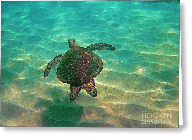 Turtle Sailing Over Sand Greeting Card by Bette Phelan