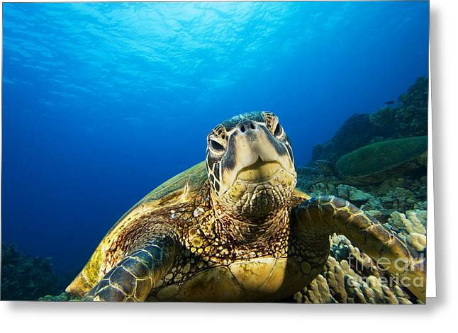 Turtle Stare Greeting Card by Dave Fleetham - Printscapes