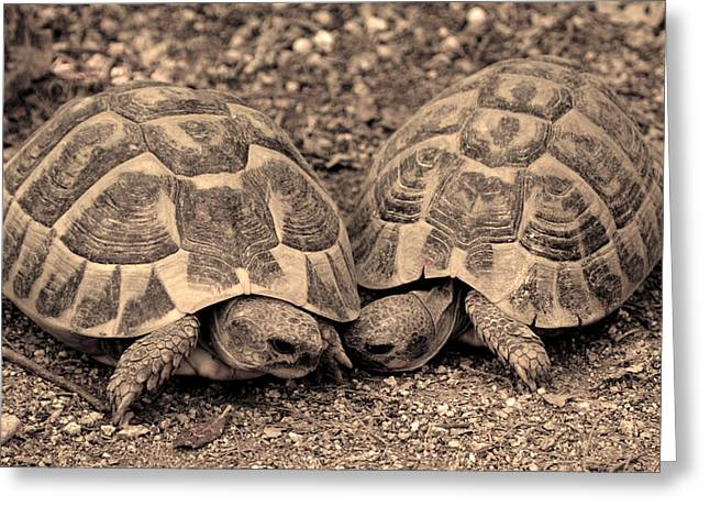 Pairs Greeting Cards - Turtles pair Greeting Card by Gina Dsgn